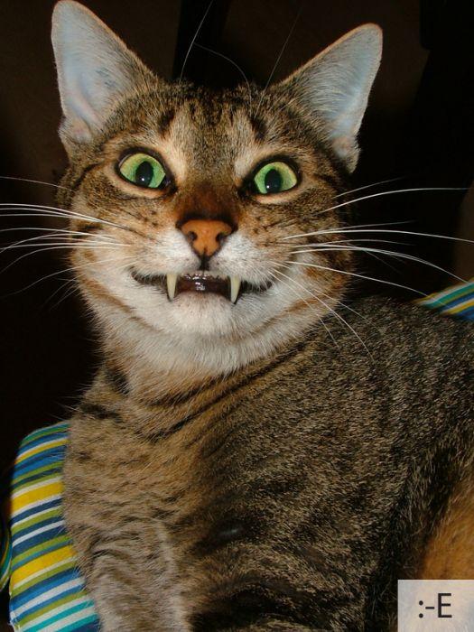 شکلک های بامزه گربه های ناز