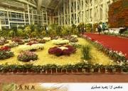 بهبود بازار تولیدی گل و گیاه در کشور