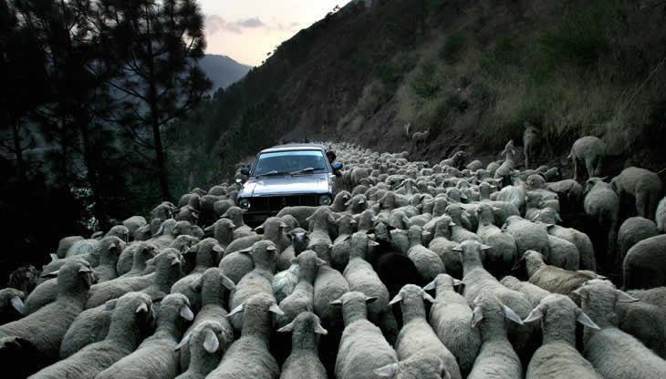 این هم یه جور ترافیک!/عکس