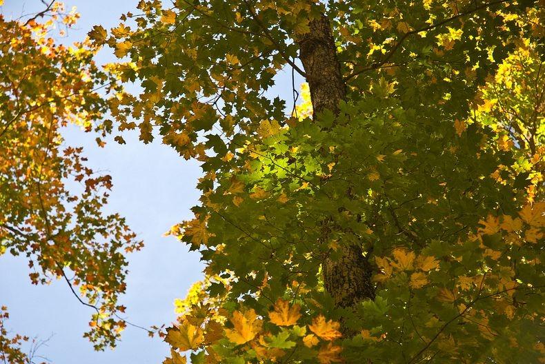 تصاویر پارک زیبای آلگوکویین در فصل پاییز
