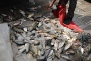 دستگیری 28 متخلف شکار و صید در شهرستان مسجد سلیمان