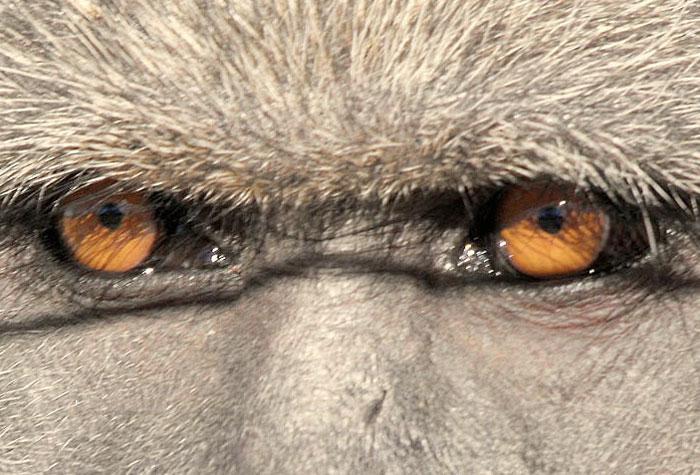 تصاویر گوناگون و با کیفیت از حیوانات