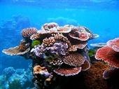 دیواره مرجانی بزرگ دریای کورال در خطر است