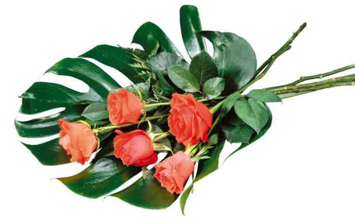 عکس های دیدنی و زیبا از گلها
