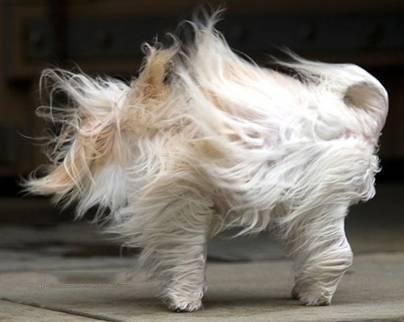 عکس های باحال و خنده دار از حیوانات