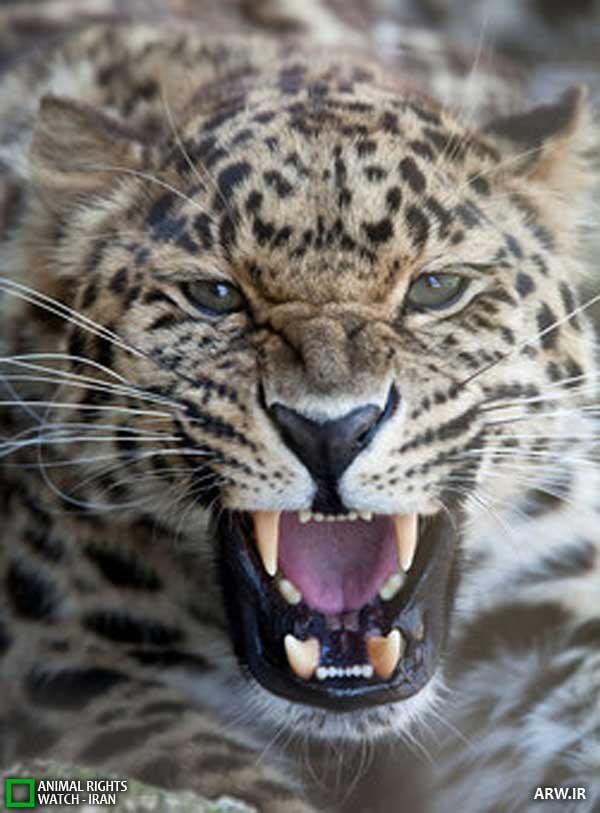 Animal-Rights-Watch--ARW-1-777