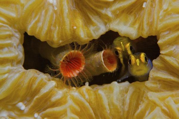 www.ebhamlinks.com | عکسهای رقابت برترینهای نشنالجئوگرافی