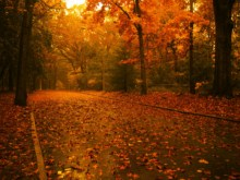 http://www.momtaznews.com/wp-content/uploads/2012/10/56190b46612779999580a6b0ab1965c9.jpg