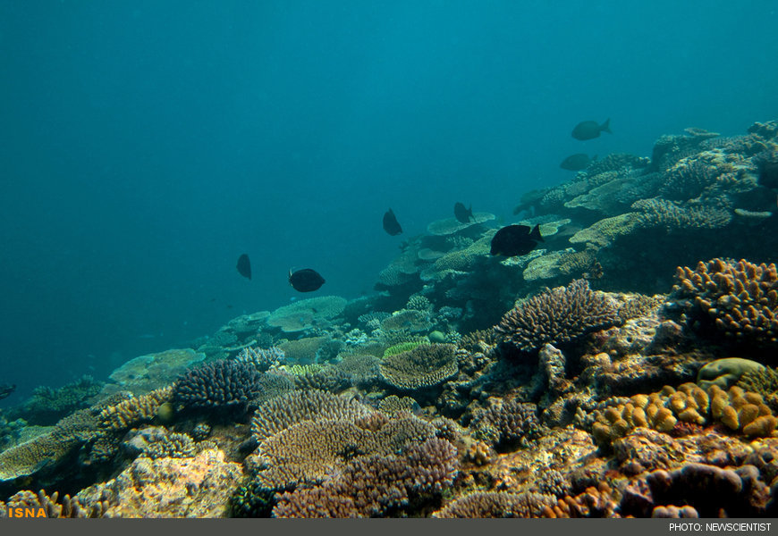 http://media.isna.ir/content/great-barrier-reef.jpg/6