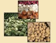 سه محصول ارزانقیمت در بازار را بشناسید/ هندوانه نوبر میآید