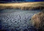 خشکسالی باعث کاهش تولید گندم بود