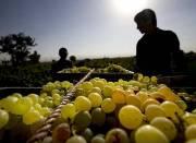 صادرات انگور و کشمش به کشورهای اروپایی و عربی/ افزایش 100 درصدی صادرات انار