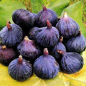 برای خلاصی از بوی بد دهان این میوه را مصرف کنید