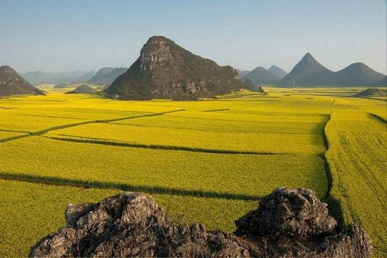 مزرعه ای فوق العاده زیبا از جنس طلا