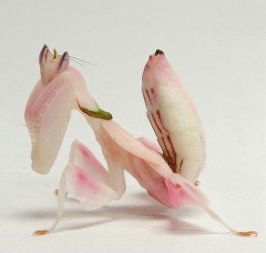 عکس هایی از زیباترین حشره جهان