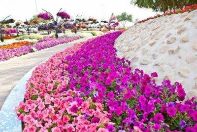 باغ گل العین امارات در رکوردهای گینس
