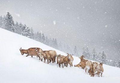 عکس های برنده در عکاسی از حیات وحش 2019