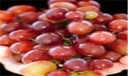 خبرگزاری فارس: چقدر انگور بخوریم که چاق نشویم؟
