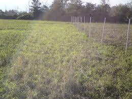 قانون استخدام ناظرین بخش کشاورزی اجرایی نشد