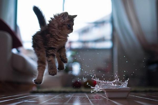 عکس های جالب و هنری از دیزی گربه خوش شان (1)