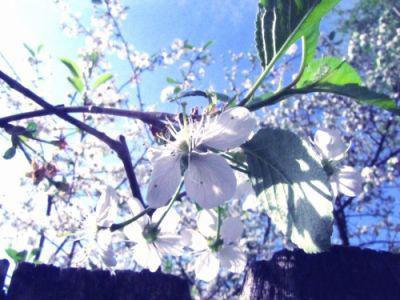 تصاویر پس زمینه زیبا از گلها و درختان سرسبز