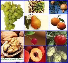 کاهش میزان واردات میوه نسبت iبه سال قبل