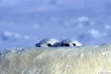 عکس های پادشاه قطب شمال