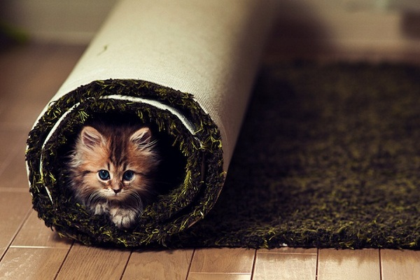 عکس های جالب و هنری از دیزی گربه خوش شان (4)