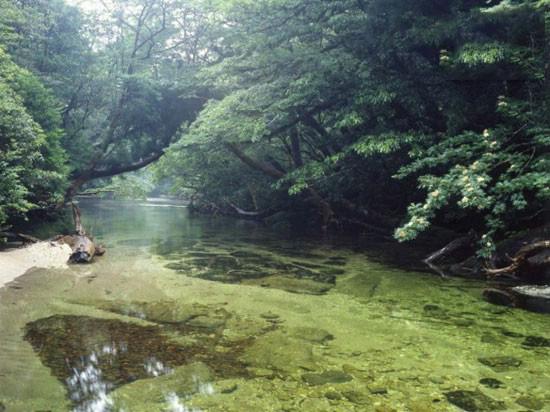 زیبایی های جذب کننده جزیره یاکوشیما
