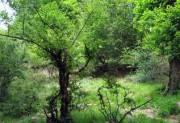 ترسیم نقشه راه مدیریت بهینه جنگلهای کشور با برنامه اقدام ملی جنگل
