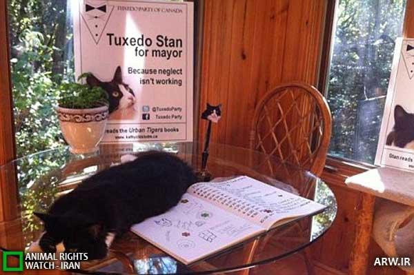 گربهکانادایی برای شهردار شدن،نامزد شد!
