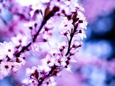 تلگرام بانک کشاورزی تصاویر پس زمینه زیبا از گلها و درختان سرسبز - جديدترين ...