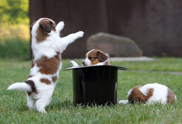 تصاویر طنز حیوانات