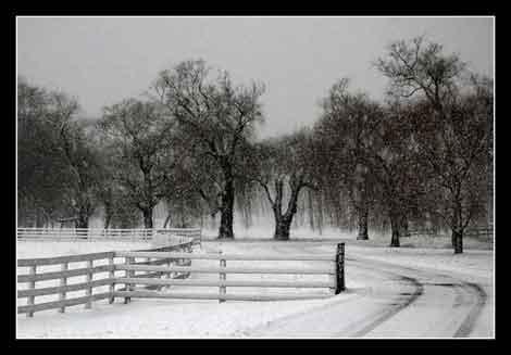 winter خاطرات زمستان را به بهار نیاور
