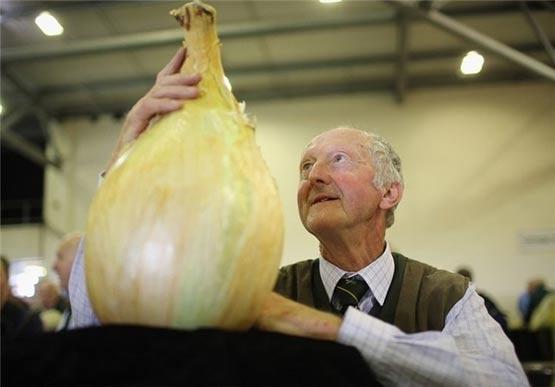 جالبترین تصاویر جالب: جشنواره سبزیجات غول پیکر