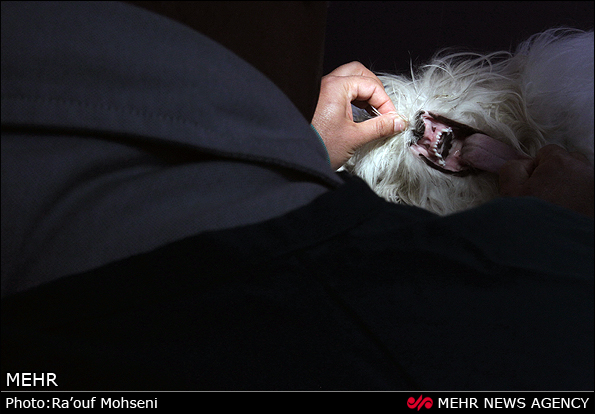 تصاویر کلینیک حیوانات