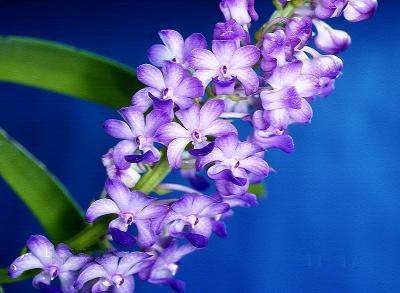 تصاویر گل های زیبای ارکیده