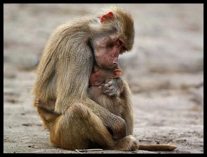عکس های ناز از نوزادان حیوانات