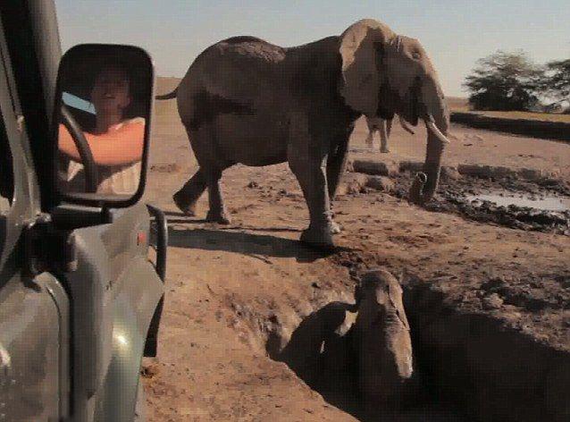 تصاویر بسیار زیبا از نجات یک جانور و پیوستن او به مادرش