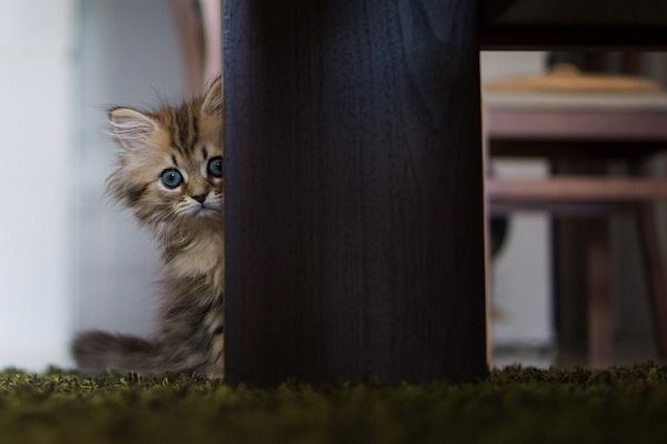 عکس های جالب و هنری از دیزی گربه خوش شان (2)