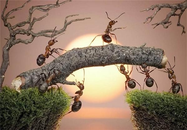 تصاوير بامزه از شهر مورچه ها