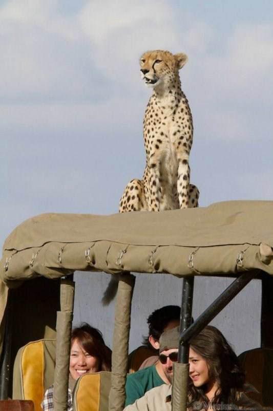 تصاویر جالب از حیات وحش آفریقا