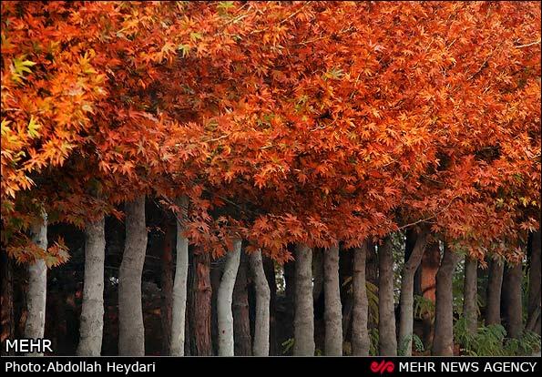 تصاویر طبیعت پاییزی تهران