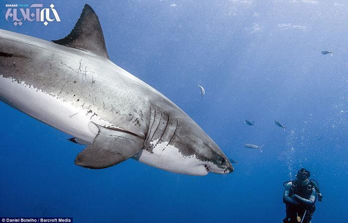 خوردن سر انسان ها توسط  ۲۴ ساعت غواصی وعکاسی با کوسه سفید ۵.۶ متری - جديدترين ...