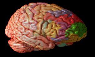 موشکافی از مغز انیشتین