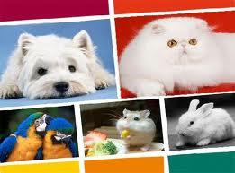 عوارض جبران ناپذیر نگهداری از حیوانات