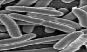 باکتری های موجود در قطب شمال و جنوب شبیه یکدیگرند