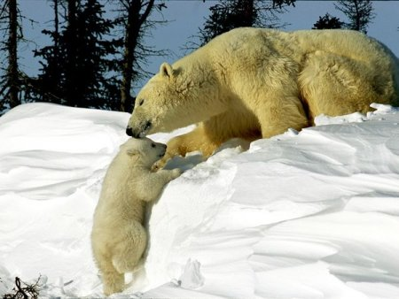 تصاویر فوق العاده زیبا از حیوانات