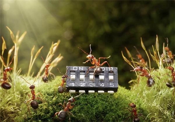 تصاویر بامزه از شهر مورچه ها