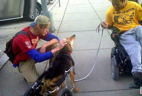 سگ ایرانی سوژه جدید آمریکا شد